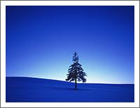 「冬の風景壁紙」
