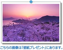 愛媛県 開山公園の日の出と桜|こちらの画像は「壁紙プレゼント」にあります。