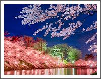 「春の風景壁紙」