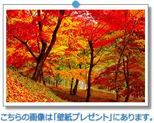兵庫県 最上山公園もみじ山|こちらの画像は「壁紙プレゼント」にあります。