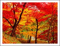 「秋の風景壁紙」